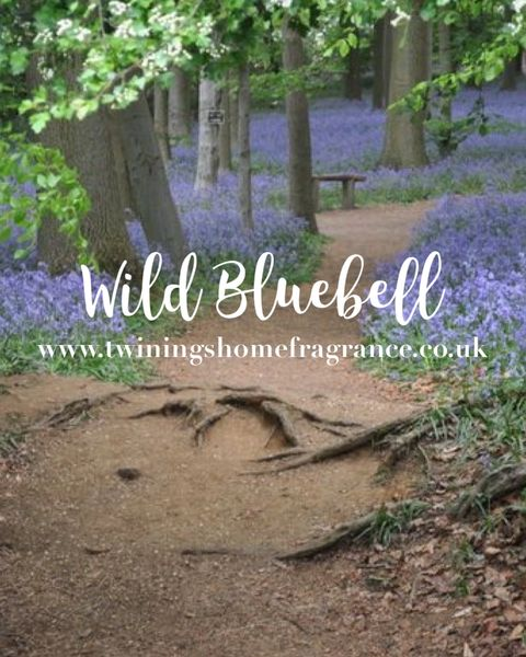 Limited Edition Wild Bluebell Wax Melts