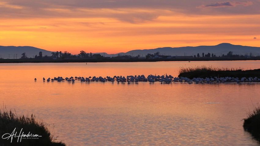 Birding tours and bird watching holidays on the Ebro Delta in Spain
