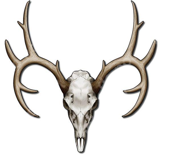 """Deer / Buck skull 4"""" decal sticker"""