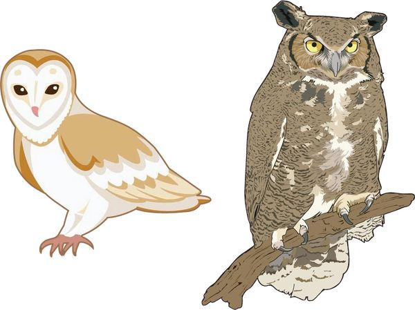 2 pack Owl Decal Bumper Sticker Peel and Stick for Windows Cars Trucks laptops