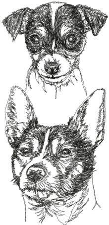 Tenterfield Terrier