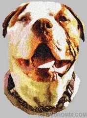 Alpha Blue Blood Bulldog