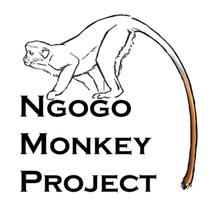 The Ngogo Monkey Project