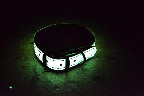 Glow Dog Collar