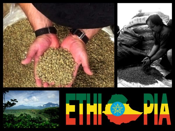 Ethiopian Yirgacheffe Micro-Lot Fair Trade / Organic Certified