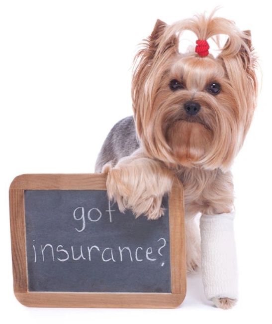Pet Insurance Az 101 insurance scottsdale arizona peoria dc ranch best insurance az 85260 85250 8525
