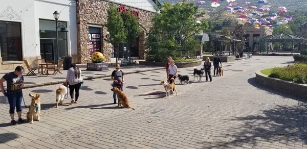 From our Next Level Obedience class at Provo Riverwoods. A dog practicing a weave exercise.