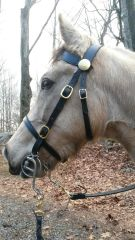 FIELD TRIAL BRIDLE