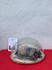 Snow effect dome with mounted German SS soldiers M35 helmet blown apart relic with decal recovered from the 1942-1943 battlefield at Stalingrad in Russia