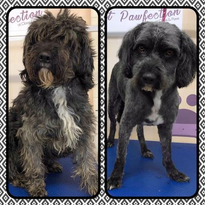Ultimutt Pawfection  Dog grooming Bath and blow dry Breed standard Boston dog groomer Skegness