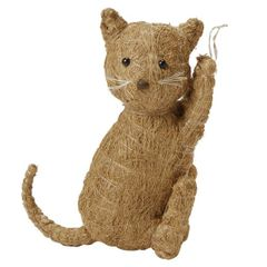 Coir and Coconut Palm Cat
