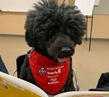 Read with Saskatchewan based therapy dogs