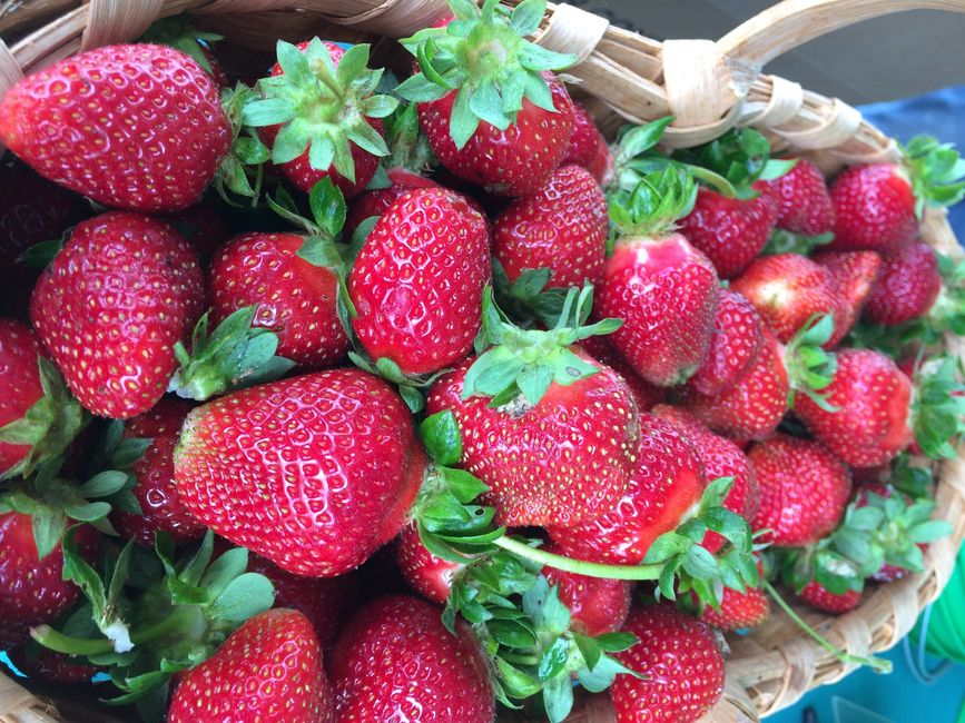 FRESH UPICK STRAWBERRIES DOUBLE R STRAWBERRIES