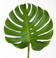 Flower District NYC Wholesale Flowers  Flower Supply Flower Market NYC Monstera Leaves Tropical