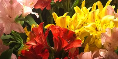 Flower District NYC Wholesale Flowers Flower Supply Flower Market NYC alstromeria fresh cut flowers