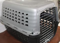 Medium Size Petmate Animal Carrier Kennel