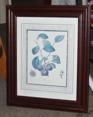 """Prune"" Framed Botanical Print"