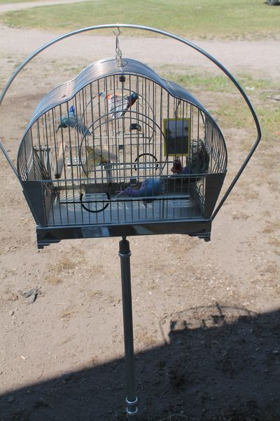 Vintage Hendryx Chrome Bird Cage With Stand And 4 Birds