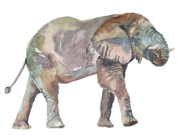 African Elephant-SOLD