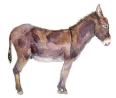 Donkey-SOLD