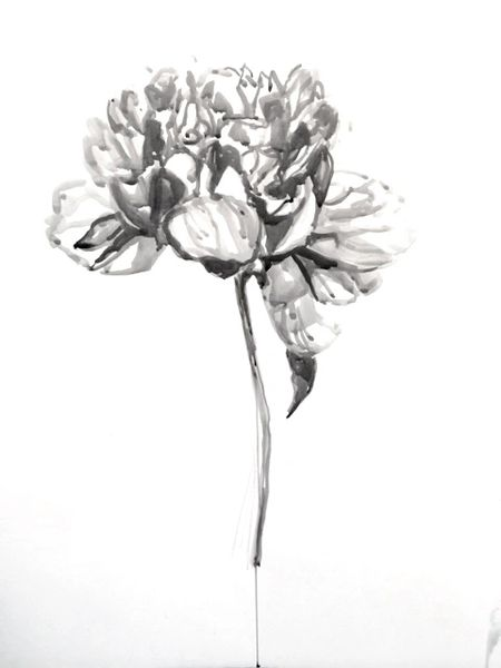Peony in Ink- SOLD