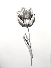 Tulip in Ink