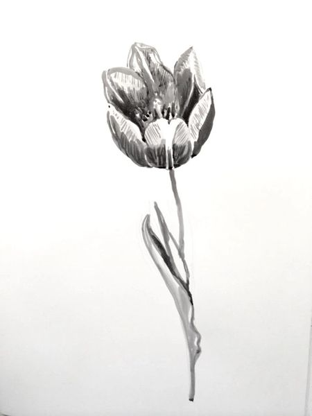 Tulip in Ink