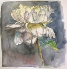White Peony with Grey-sold