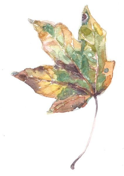 12 Printed Green Fall leaf Place Cards