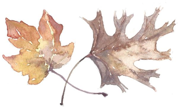 12 Printed Fall Leaves Place Cards