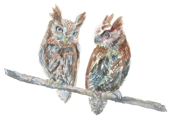 12 Printed Place Cards - Owl Pair