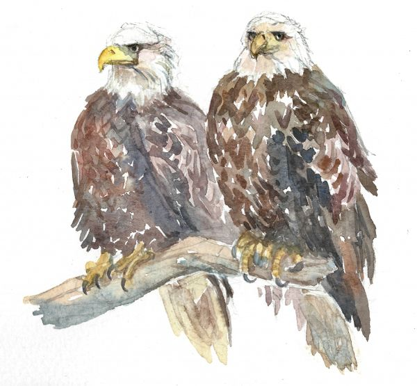 12 Printed Place Cards - Eagle Pair