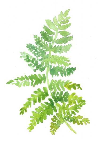 Original Watercolor - Fern 1-SOLD
