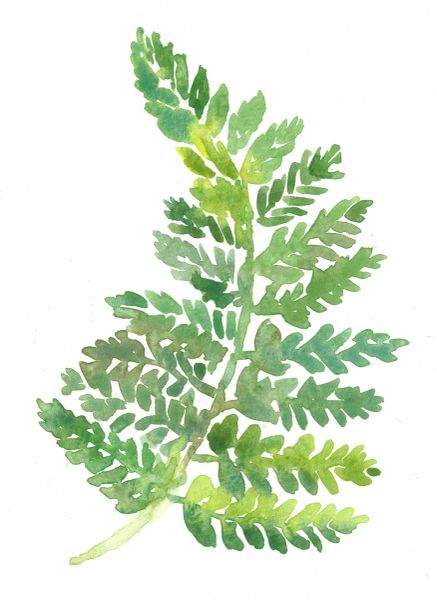 Original Watercolor - Fern 2-SOLD