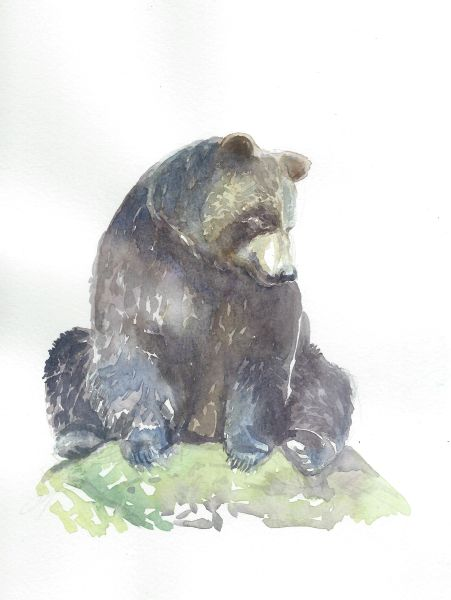 Original Watercolor - Bear Sitting