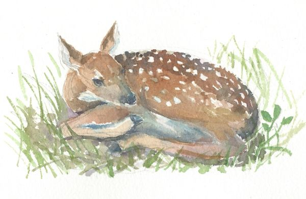 Original Watercolor - Baby Deer lying down