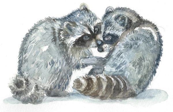 Original Watercolor - Raccoon Pair