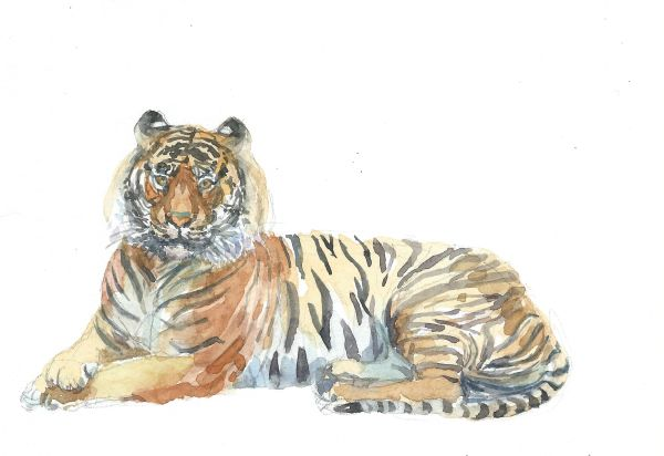 Original Watercolor - Tiger lying down