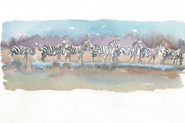 Original Watercolor - Zebra Dawn