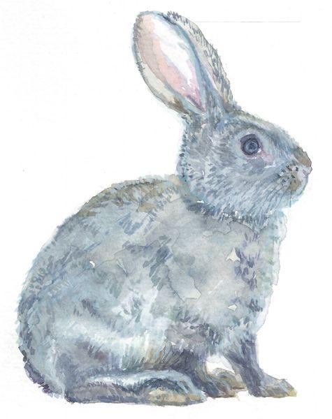 Original Watercolor - Bunny Grey facing right