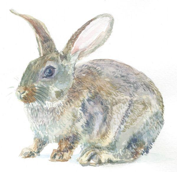 Original Watercolor - Bunny Big Ears