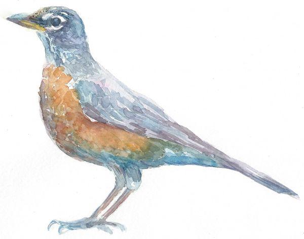 Original Watercolor - Bird 1