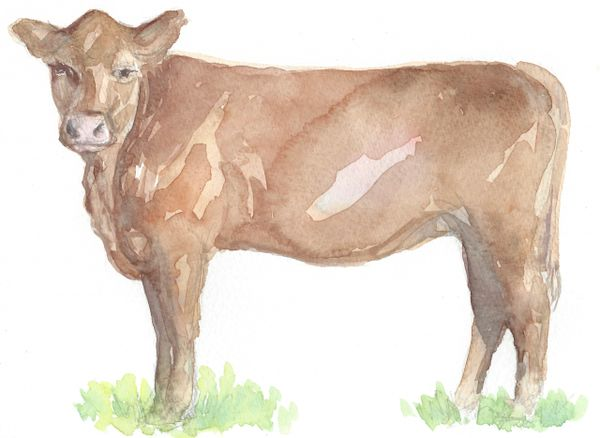Original Watercolor - Brown Cow