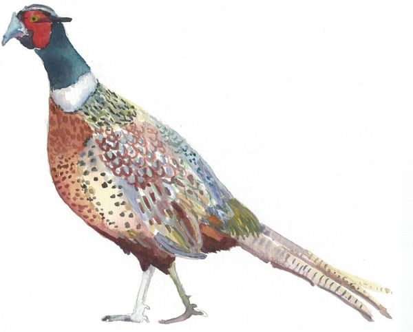 12 Printed Pheasant Place Cards