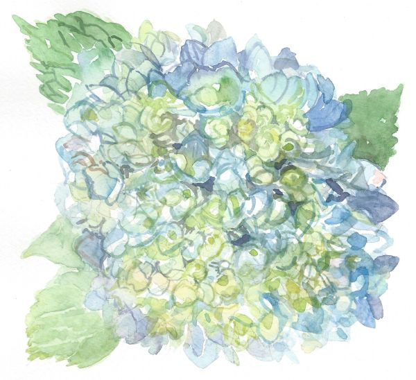 12 Printed Hydrangea Place Cards