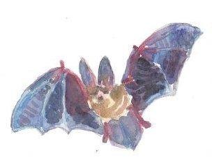 12 Printed Halloween Bat Place Cards