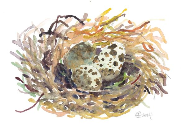 12 Printed Quail's nest Place Cards