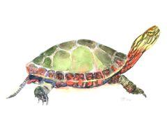 6 Printed Turtle Gift Tags/Enclosures