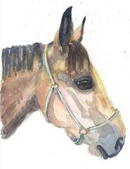 6 Printed Horse head Gift Tags/Enclosures