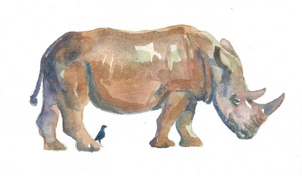 Rhino with bird